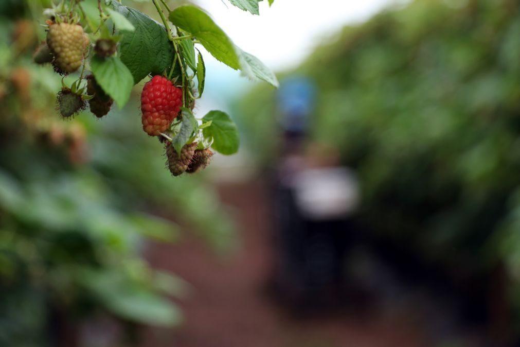 ACT fiscalizou desde o ano passado 108 empresas agrícolas em Odemira e detetou 123 infrações