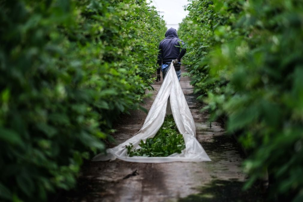 Covid-19: Relatório alerta para chegada de mais imigrantes ao Alentejo nos próximos meses
