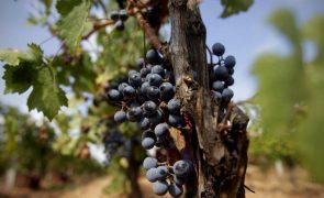 Covid-19: Ministra anuncia apoio excecional de 8 ME para o setor do vinho
