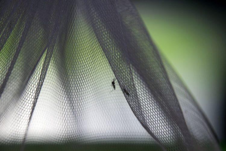 Cabo Verde registou três casos de dengue em dezembro