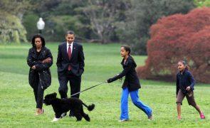 Morreu Bo, o cão de água português de Barack Obama