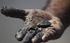 Desmanteladas três redes internacionais de captura ilegal de amêijoa no Tejo