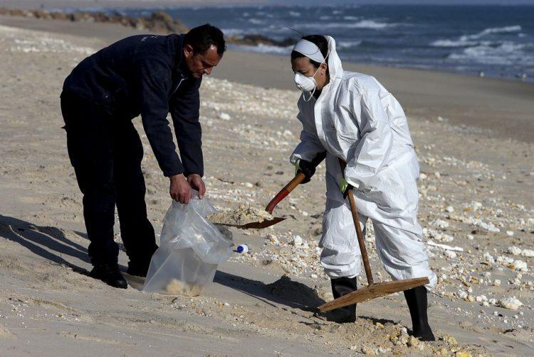 Pelo menos 300 voluntários participam na remoção de espuma no Algarve