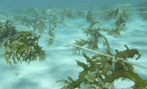 Algas e larvas são