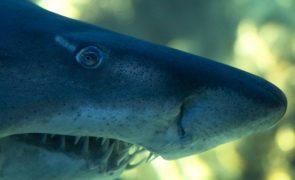 Cientistas sugerem que tubarões usam campo magnético como GPS para nadarem longas distâncias