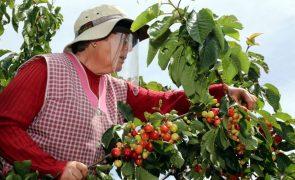 Festival da cereja regressa no sábado a Proença-a-Nova