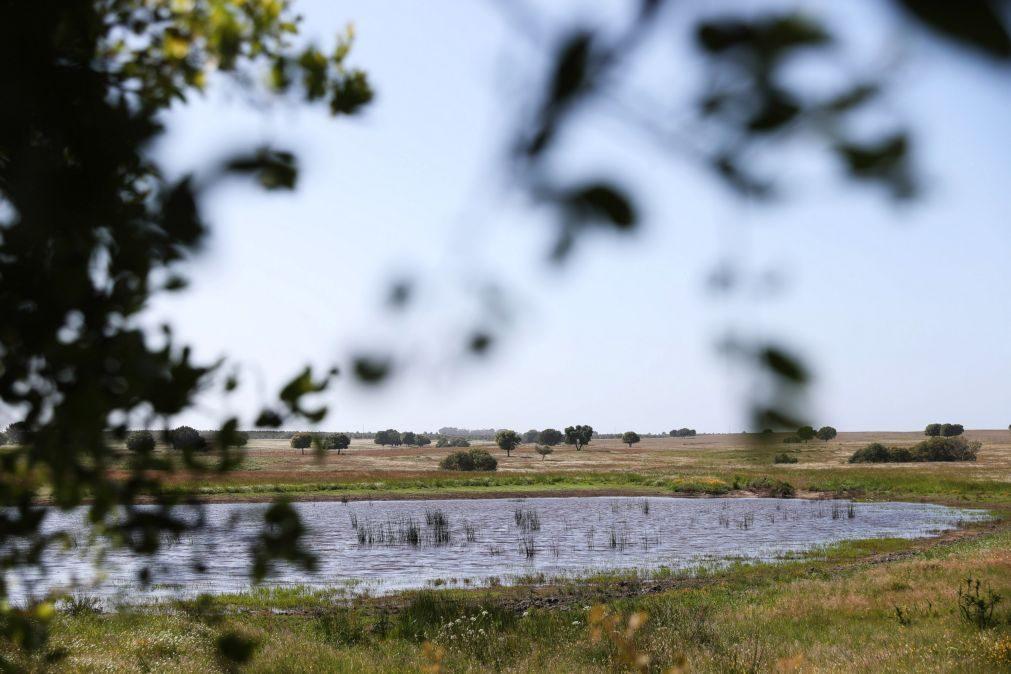 Os raros, frágeis e prioritários charcos temporários estão a desaparecer do Sudoeste