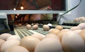 ASAE apreendeu mais de um 1,3 milhões de ovos na região Centro