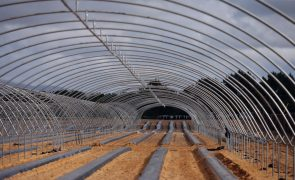 Empresas agrícolas em Odemira receberam benefícios fiscais superiores 500.000 euros em 2019