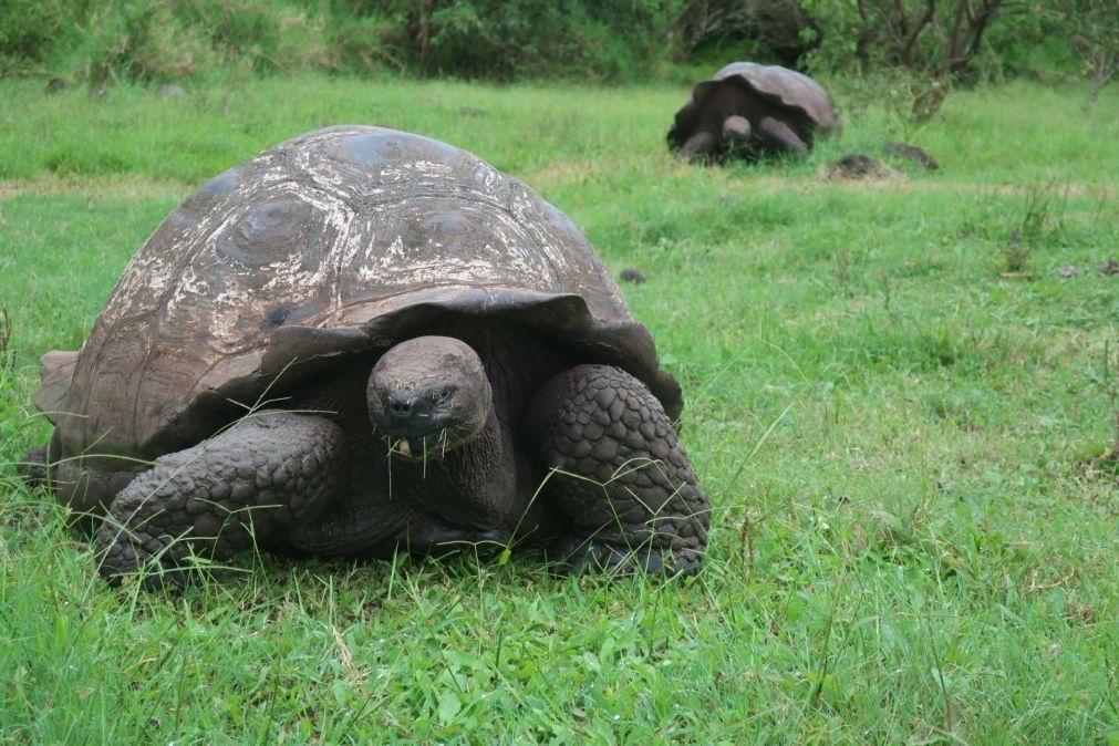 Poluição e pesca artesanal entre fatores que ainda ameaçam tartarugas em Angola