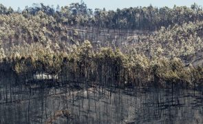 PCP diz que populações ainda esperam por apoios na sequência dos fogos em Pedrógão Grande