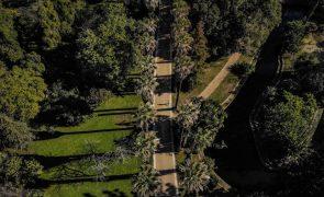 Coreógrafos fazem maratona de improvisos no Jardim Botânico para celebrar a procrastinação
