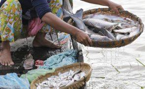 Farinha e óleo de peixe destinados à Europa e China privam populações africanas de alimentos essenciais - relatório