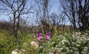 ONU apela para que se recuperem mil milhões de hectares de terra