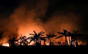 Desflorestação da Amazónia brasileira bate recorde em maio
