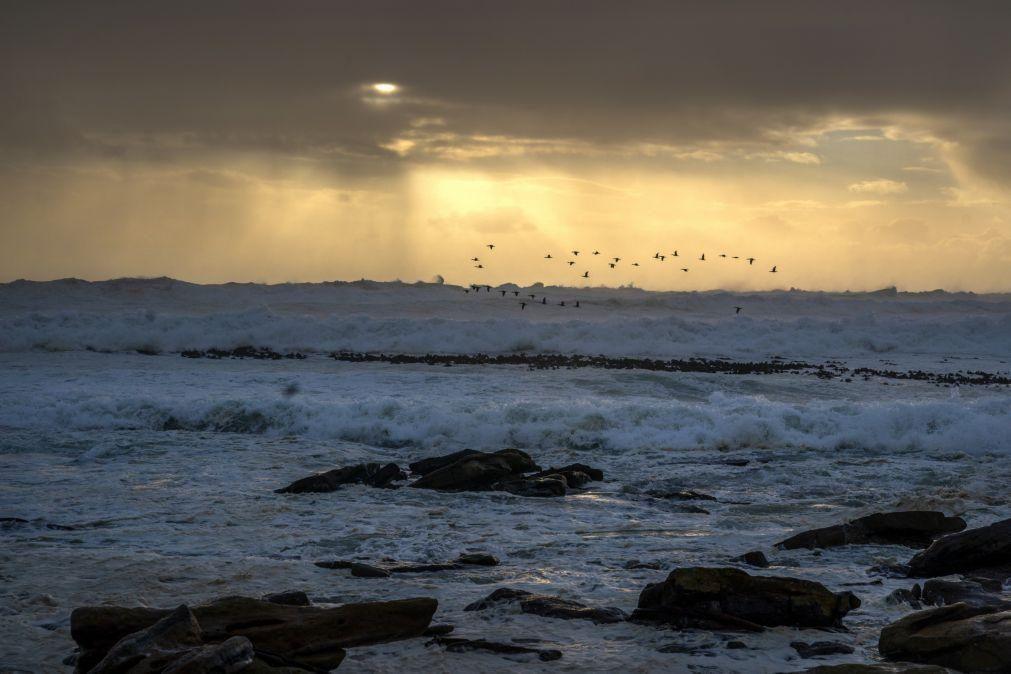 Biodiversidade do Atlântico sofreu