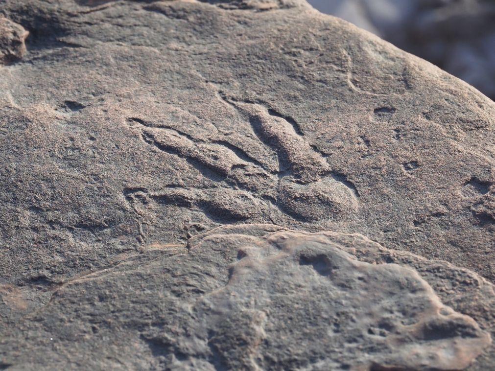 Maior dinossauro descoberto na Austrália identificado como uma nova espécie