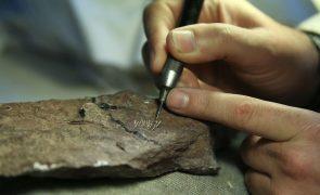 Plesiossauro mais antigo da Península Ibérica descoberto em São Pedro de Moel