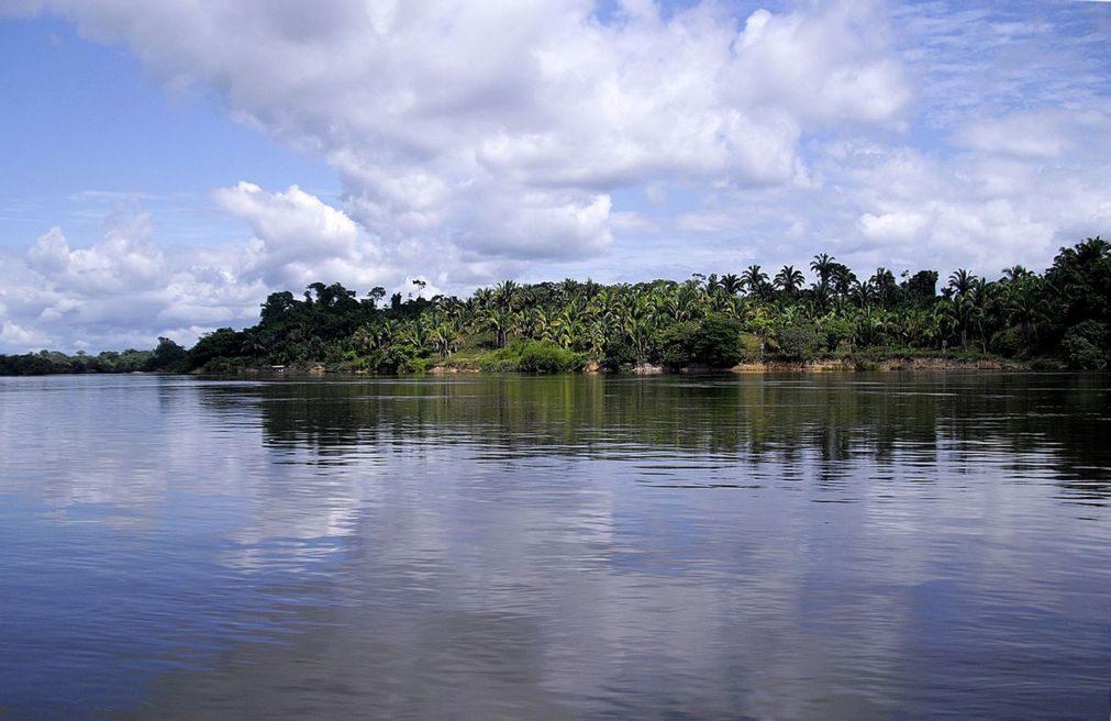 Exportação de gado vivo pressiona desflorestação da Amazónia no Brasil