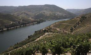 Granizo já afetou cerca de 2.200 hectares de vinha no Douro