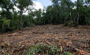 Incêndios: Governo lança projeto do cadastro na região de Viseu Dão Lafões com 14 balcões