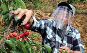 Produção de cereja deve triplicar este ano face a 2020 - INE