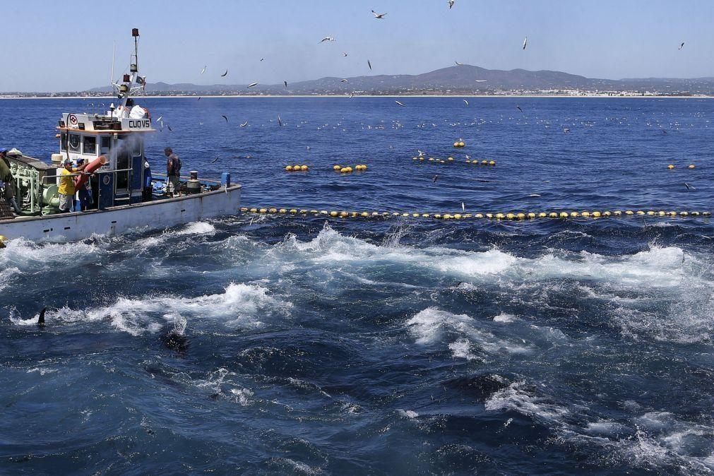 Açores reivindicam reforço da quota do atum patudo