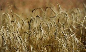 Japão apoia Cabo Verde com quase 1,9 MEuro para compra de cereais