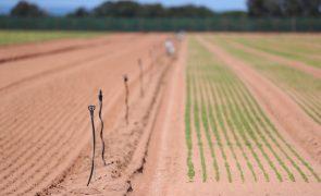 Governo vai abrir dois avisos de 15 ME para jovens agricultores e pequenos investimentos
