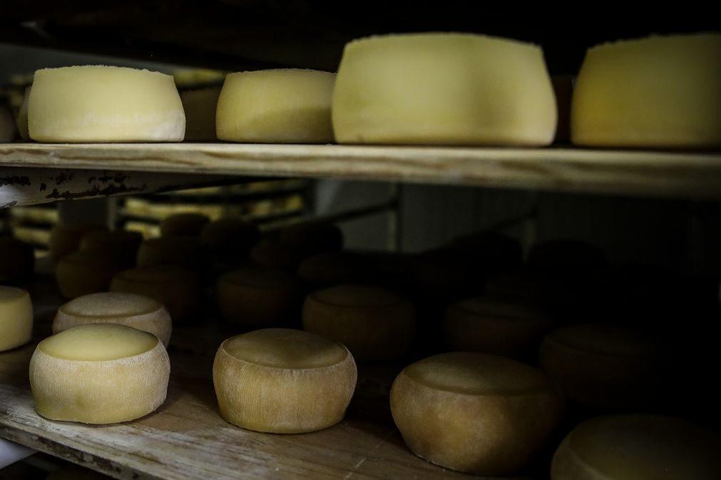 Produtores de queijo veem na