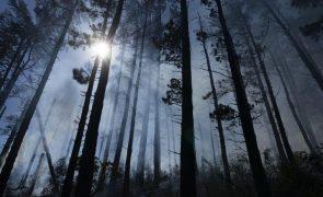 Consumo europeu de biodiesel destruiu quatro milhões de hectares de florestas