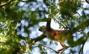 Desflorestamento da amazónia brasileira cresce 17,1% em 6 meses