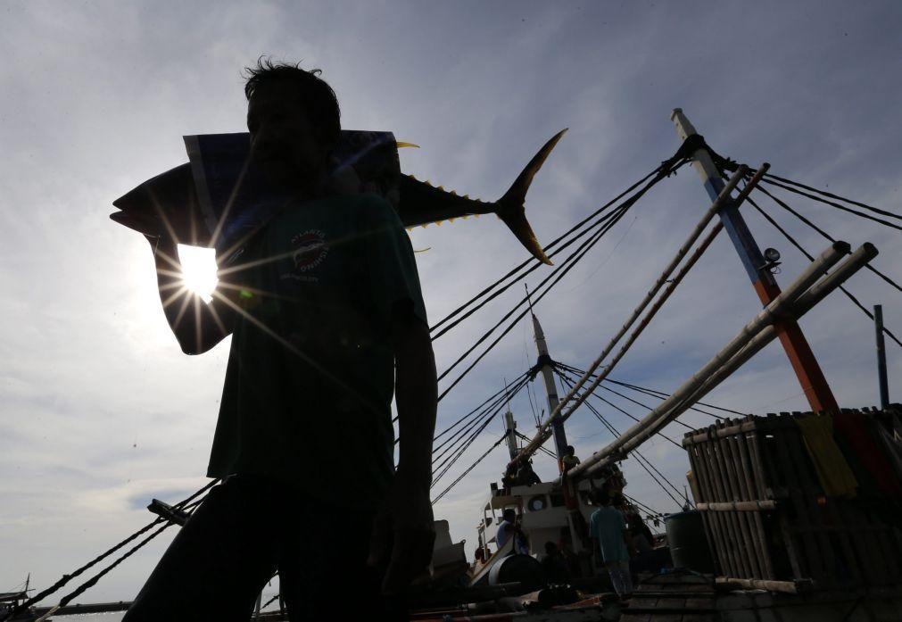 Açores e Madeira com aumento de 8% da quota de pesca do atum patudo