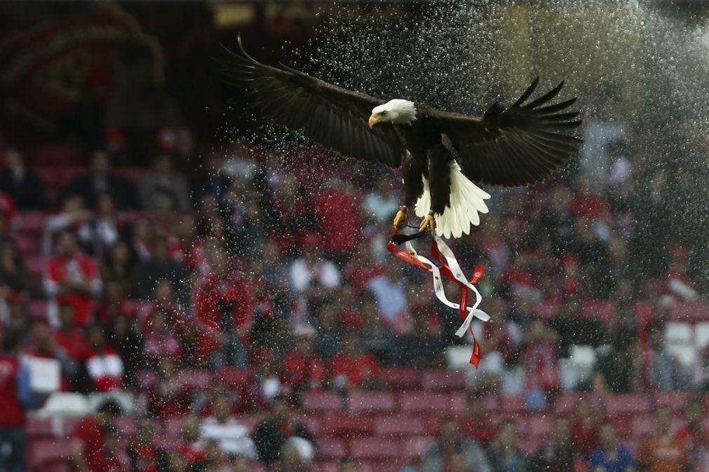 Movimento de sócios do Benfica defende convocação de eleições