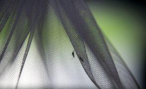 Governo angolano diz que surto de malária no país começa a declinar