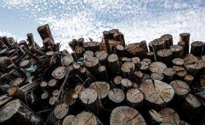 Trinta mil toneladas de madeira queimada em Monchique aguardam retirada do terreno