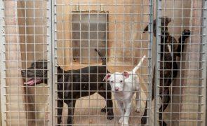 Veterinários querem levantamento nacional de animais abandonados