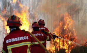 Perto de 40 crimes de incêndio florestal nas últimas 24 horas
