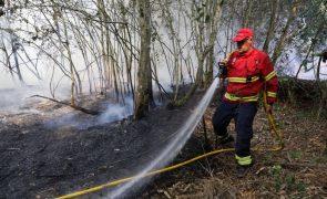 Incêndio que deflagrou no concelho de Mogadouro foi dado com