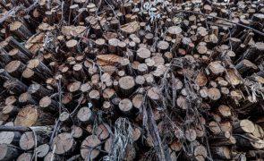 Justiça moçambicana constitui nove arguidos por exportação ilegal de madeira para a China