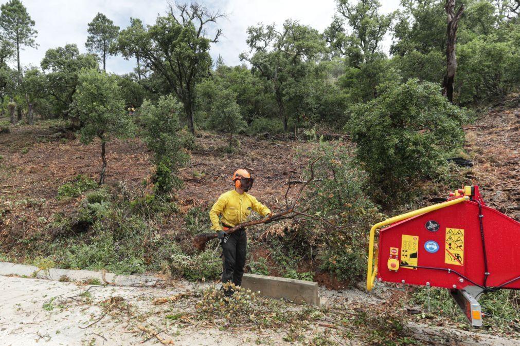 Sapadores florestais iniciam hoje dois dias de greve para exigirem uma carreira