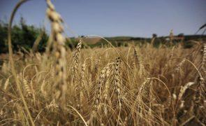 Covid-19: Agricultura evidenciou resiliência não vista noutros setores em 2020 - INE