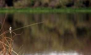 Reserva Natural do Paul do Boquilobo passa a ser gerida em modelo de cogestão