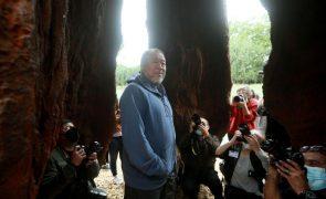 Ai Weiwei expõe em Serralves réplica com 32 metros de árvore em extinção no Brasil