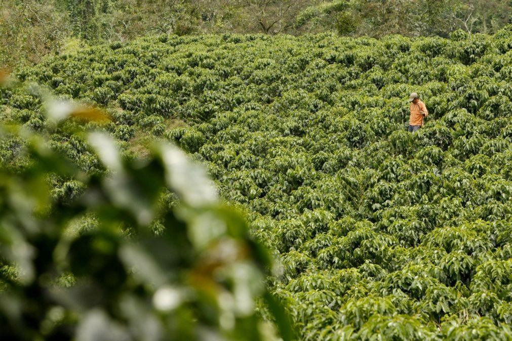 Alterações climáticas prejudicam produção de café