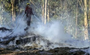 Incêndios: Fogo em Santiago do Cacém dado como dominado