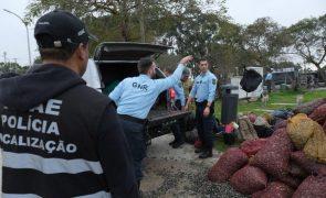 GNR de apreende 632 quilos de bivalves na região de Vouzela