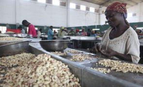 Campanha de caju deste ano é das piores que ocorreram na Guiné-Bissau -- agricultores