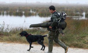 Portugal proíbe caça à rola de forma temporária