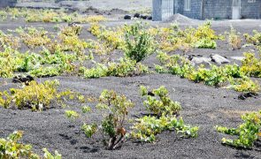 Estudo inédito reconhece qualidade do vinho do vulcão cabo-verdiano do Fogo